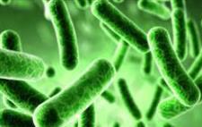 微生物制药