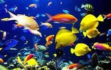 海洋生物技术
